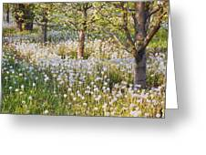 Blossoms Growing In A Fruit Orchard In Greeting Card