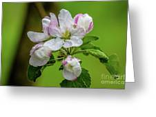 Blossoms In The Rain Greeting Card