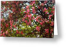 Blossoms In The Shanendoahs Greeting Card