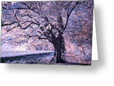 Blossoms In Winter Greeting Card