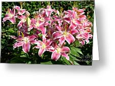 Blossoms Of Chase Lane Greeting Card