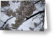 Blossoms Of Dc Greeting Card