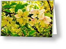 Blossoms Of Sunshine Greeting Card