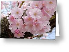 Blossoms On Bark Greeting Card