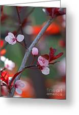 Blossoms Petite Greeting Card