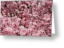 Blossoms Pink Tree Blossoms Giclee Prints Baslee Troutman Greeting Card