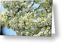 Blossoms Whtie Tree Blossoms 29 Nature Art Prints Spring Art Greeting Card