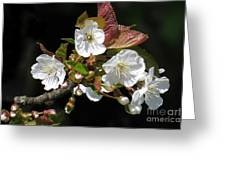 Blosson Standout Greeting Card
