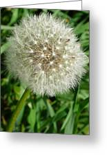 Blowball 1 Greeting Card