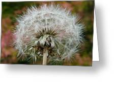 Blowball 2 Greeting Card