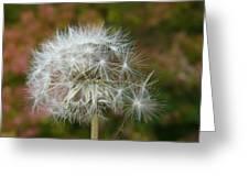 Blowball 3 Greeting Card