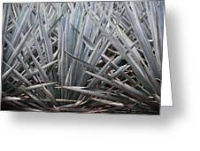 Blue Agave  Tequila Mexico  Greeting Card