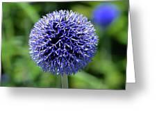 Blue Allium Greeting Card