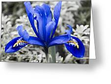 Blue Along Greeting Card