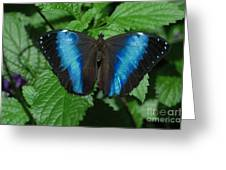 Blue And Black Greeting Card