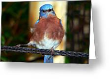 Blue And Brown Tanager Greeting Card