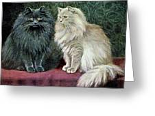 Blue And Cream Persians Greeting Card