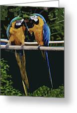 Blue And Gold Macaw 1 Greeting Card