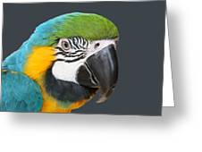 Blue And Gold Macaw Digital Freehand Painting Greeting Card