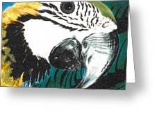 Blue And Gold Macaw Greeting Card by Dy Witt