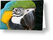 Blue And Gold Macaw Freehand Painting Square Format Greeting Card