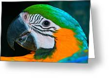 Blue And Gold Macaw Headshot Greeting Card