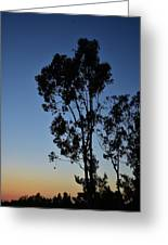 Blue And Gold Sunset Tree Silhouette I Greeting Card