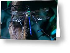 Blue And Green Dragonfly Greeting Card