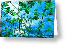 Nature's Gifts Of Blue And Green Greeting Card