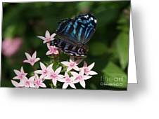 Blue And Pink Make Lilac Greeting Card