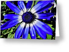 Blue And White African Daisy Greeting Card