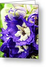 Blue And White Delphiniums Greeting Card