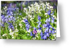 Blue And White Hyacinth Flowers Greeting Card