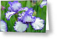 Blue And White Iris Greeting Card