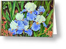 Blue And White Irises Greeting Card