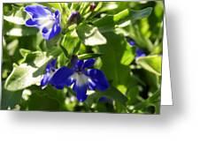 Blue And White Lobelia Greeting Card