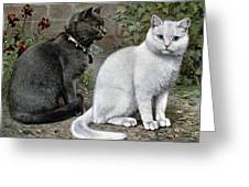 Blue And White Short Haired Cats Greeting Card