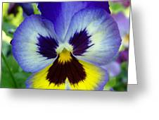 Blue And Yellow Pansy Greeting Card