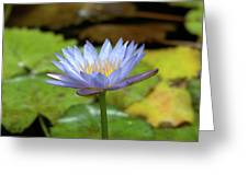 Blue And Yellow Water Lily Greeting Card