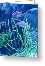 Blue Aquarium Greeting Card