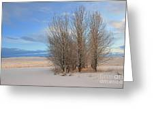 Blue Aspen Greeting Card