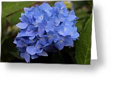 Blue Ballet Greeting Card