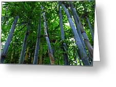 Blue Bamboo Greeting Card