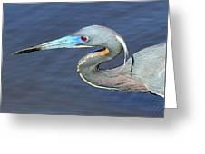 Blue Beak Greeting Card