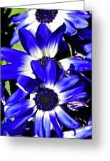 Blue Beauties Greeting Card