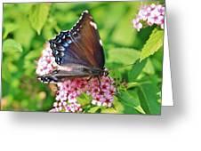 Blue Beauty 1 Greeting Card