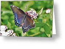 Blue Beauty 3 Greeting Card