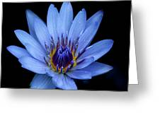 Blue Beauty Greeting Card