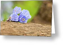 Blue Bells 2 Greeting Card