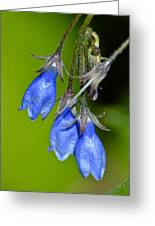 Blue Bells Are Ringing Greeting Card